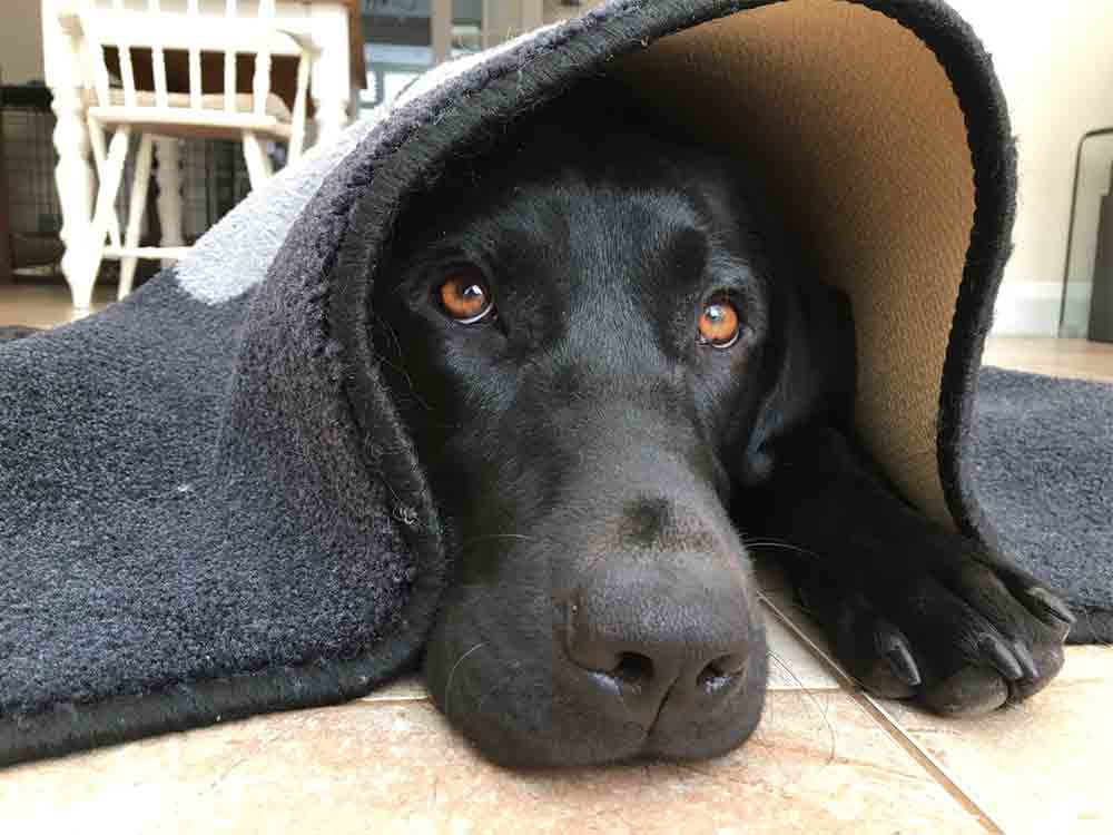 Hogan hiding under a mat - fireworks