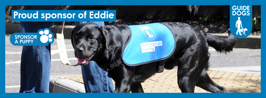 Guide dog puppy Eddie in training