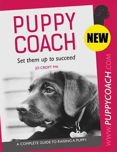 Complete guide to raising a puppy